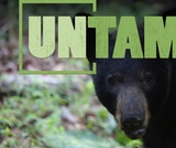 After the Release | UNTAMED | Wildlife Center of Virginia