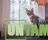 The Case for Indoor Cats | UNTAMED | Wildlife Center of Virginia