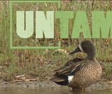 Water Birds   UNTAMED