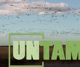 Bird Migration | UNTAMED | Wildlife Center of Virginia