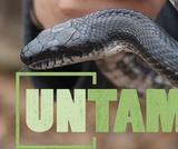 Snakes   UNTAMED