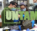 Teaching the World | UNTAMED | Wildlife Center of Virginia
