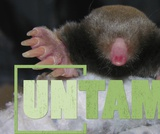 Unusual Species | UNTAMED