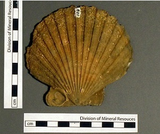 Fossil Identification Software
