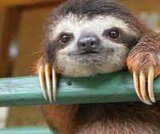 Activating Prior Knowledge: Do sloths make good pets?