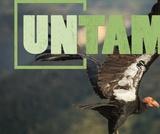 Vultures   UNTAMED