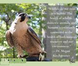 Emerging Wildlife Diseases | UNTAMED