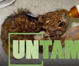 Wildlife Rehabilitation   UNTAMED - Wildlife Center of Virginia