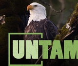 Lead Poisoning | UNTAMED | Wildlife Center of Virginia