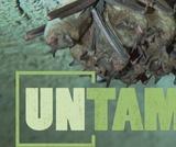 Bats | UNTAMED