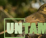 Songbirds | UNTAMED