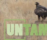 Hawks and Falcons | UNTAMED
