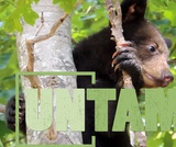Black Bears | UNTAMED